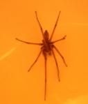 spider 97622