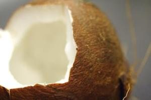 coconut 864277
