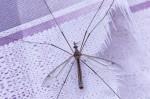 3 Mayfly IMG_0319