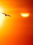 271 bird sunset 671148