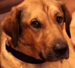 feb-4-hound-170389_640